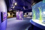 Blue Reef Lighting Case Study